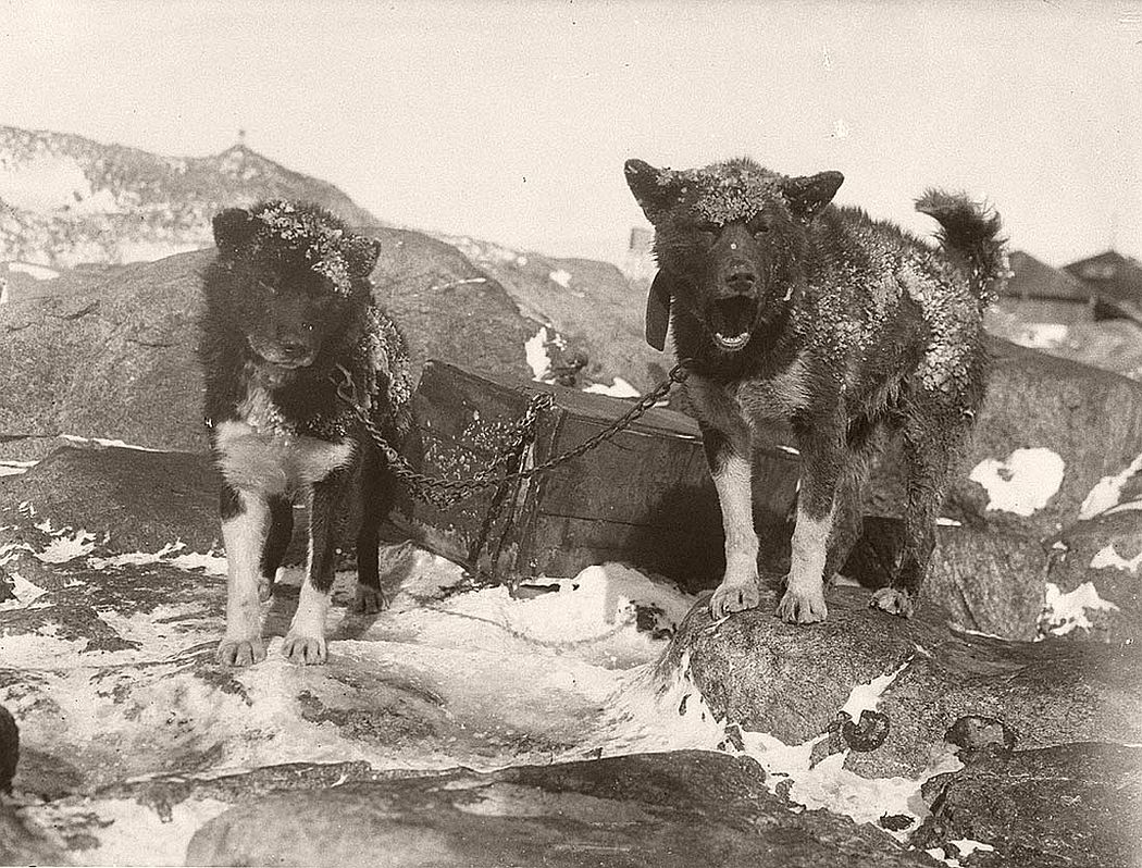 Basilisk and Ginger at Main Base, circa 1912