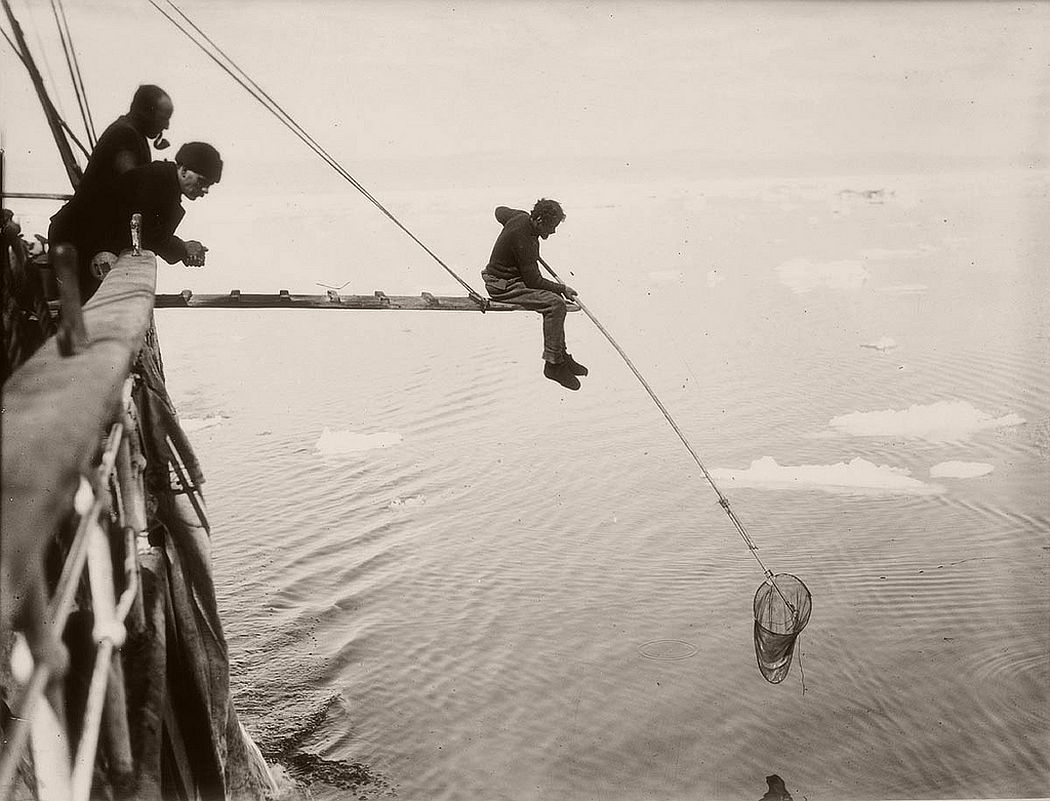 Hamilton hand-netting for macro-plankton from Aurora, circa 1912