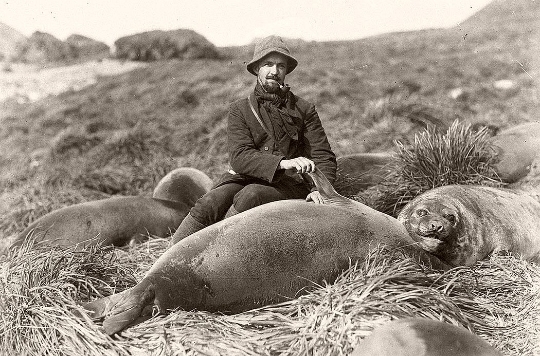 Arthur Sawyer and sea elephant pup, circa 1912