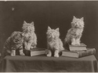 Vintage: The Globe Kittens (1902)