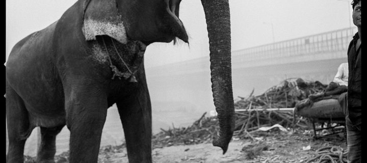 Arun Nangla: The elephant in the room