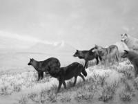 Hiroshi Sugimoto exhibition at Pace London
