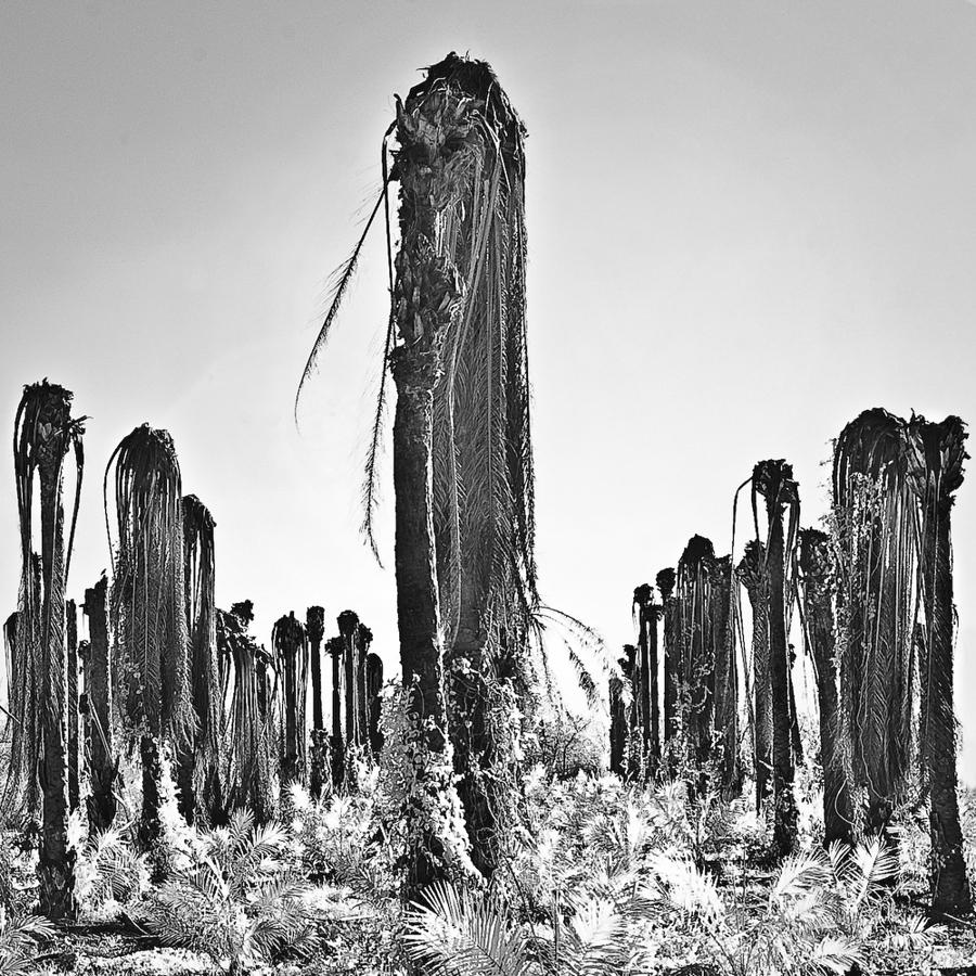 Palms 4