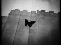 Interview with Black and White Fine Art photographer Pia Elizondo