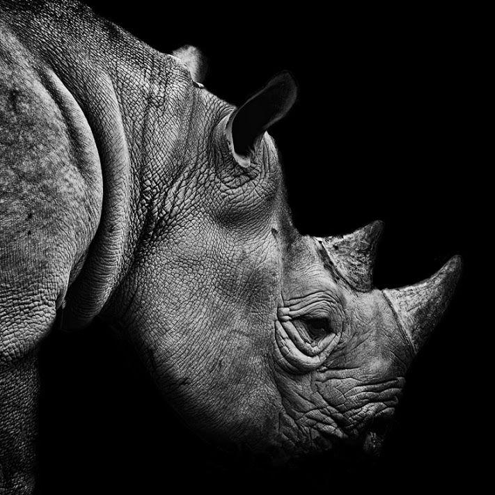 © Bill Allen Rhino