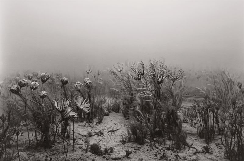 Sugimoto-Carboniferous_Period_1992-Damiani