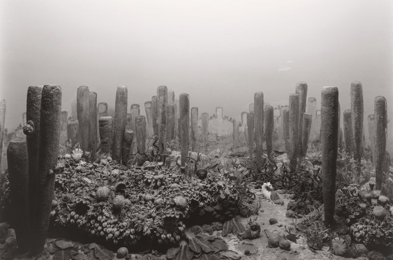 Sugimoto-Permian_Period_1992-Damiani