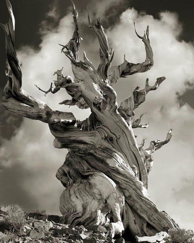ancient-trees-beth-moon-15