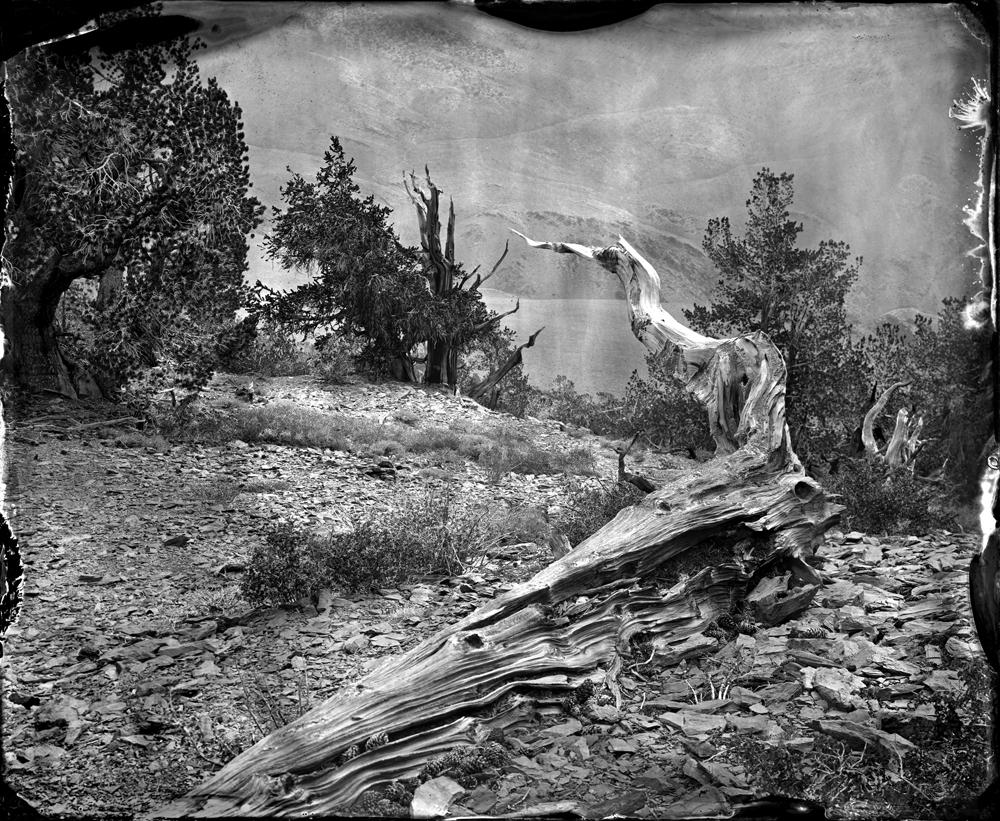 © Ben Nixon Bristlecone Forest