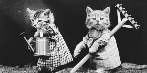 Cats and Dogs Dressed as People (1910s)