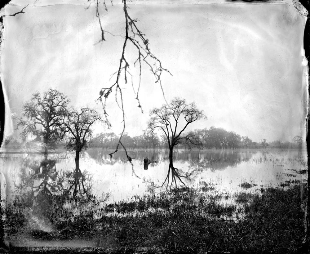 © Ben Nixon Flooded Oaks