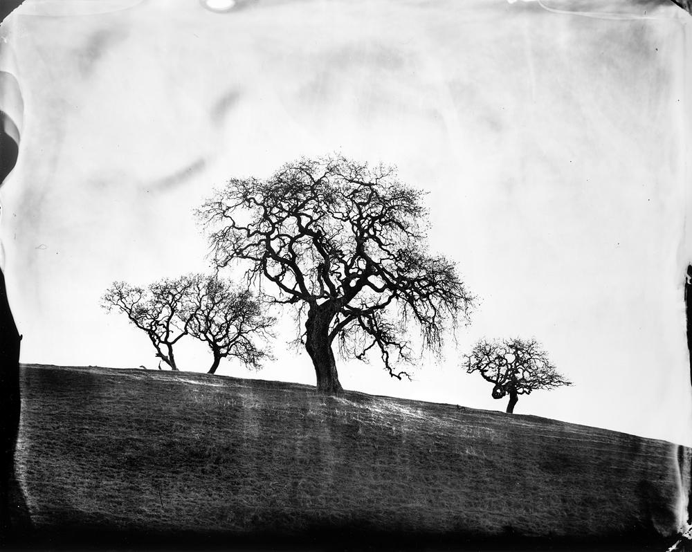 © Ben Nixon Oaks, West Marin