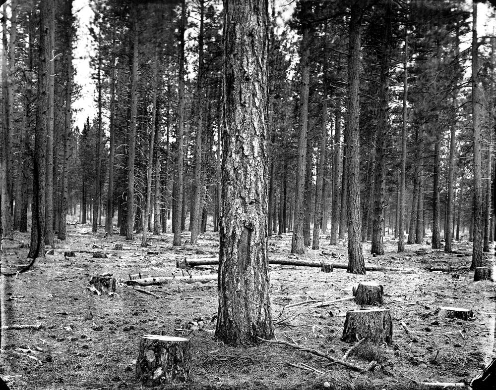 © Ben Nixon Shasta National Forest