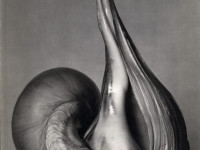 Biography: Edward Weston