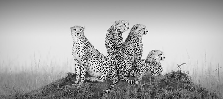 Outstanding Gallery of B&W Wildlife Photos from Monochrome Awards