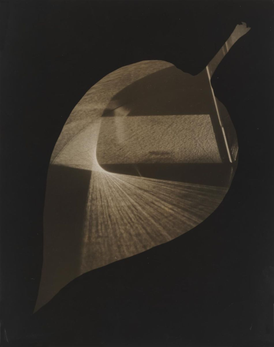 Leaf and Prism 1938 by Gy?rgy Kepes 1906-2001