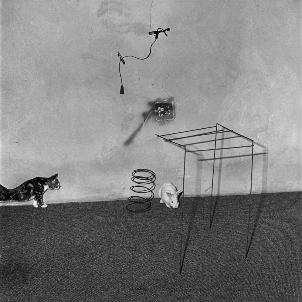 Roger_Ballen-Animal_Abstraction-09