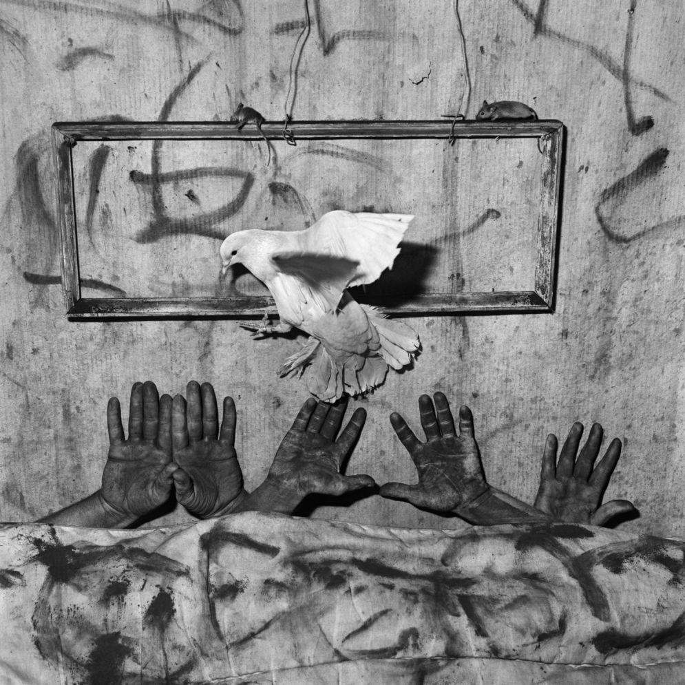 Roger_Ballen-Animal_Abstraction-22