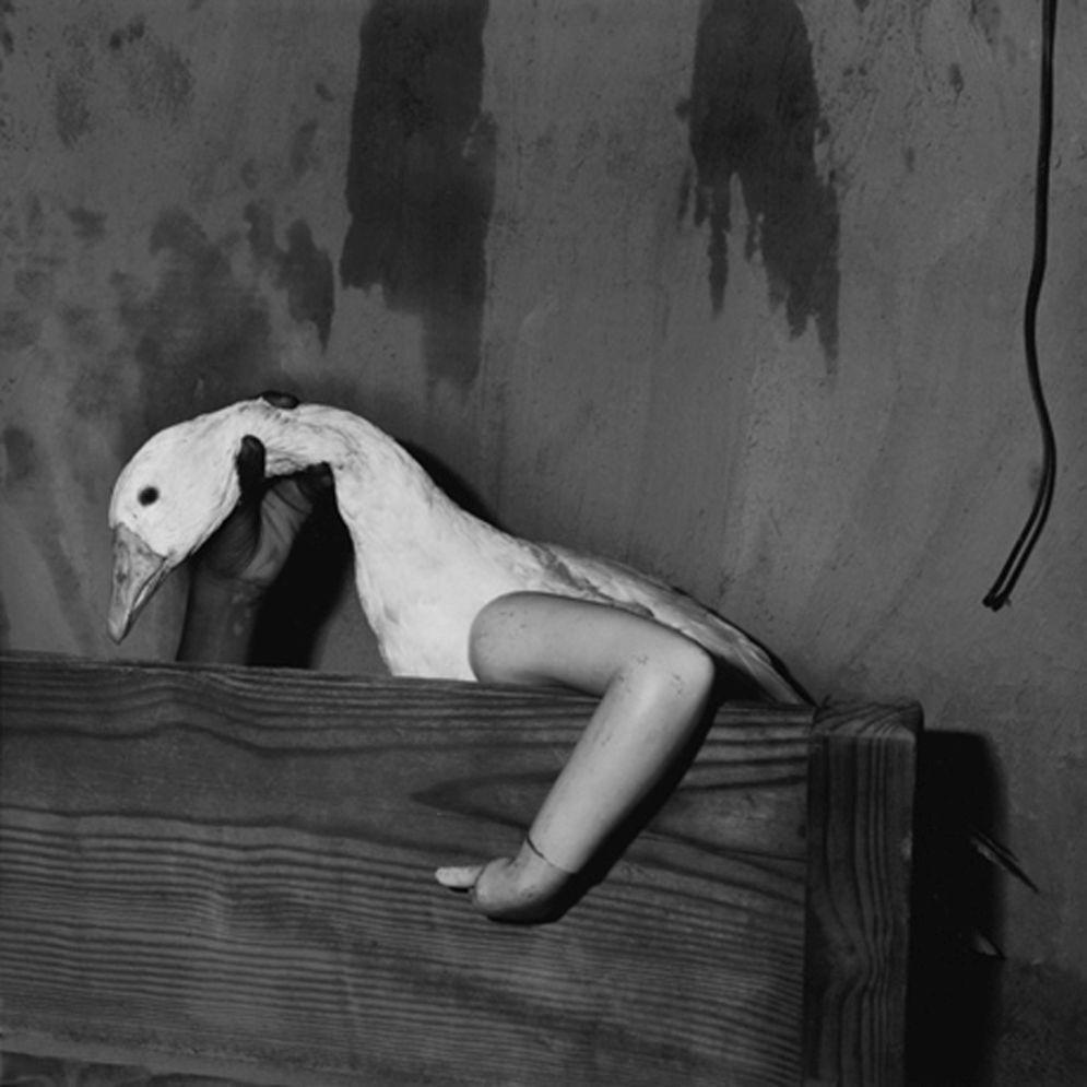 Roger_Ballen-Animal_Abstraction-44