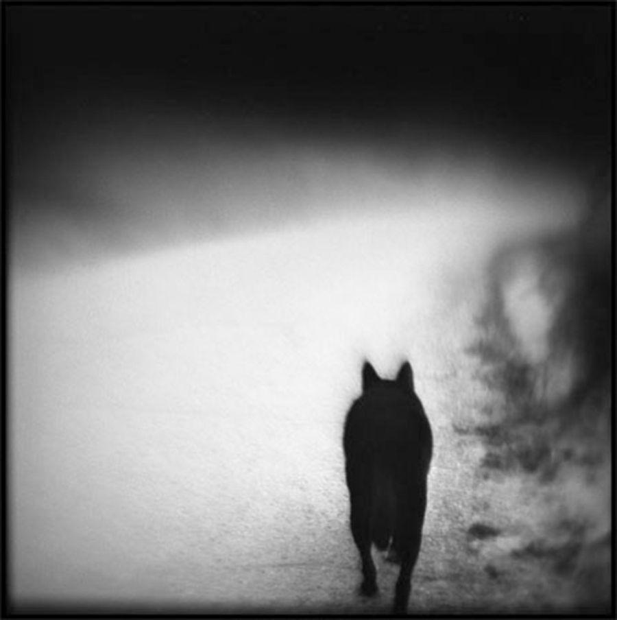 Susan_Burnstine-Within_Shadows-01