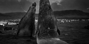 Tomasz Gudzowaty: Monsters of the Deep