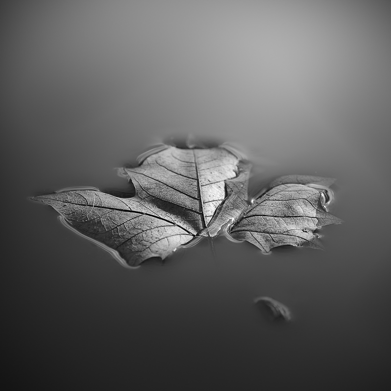 Leaf © Eduard Crispi – Honorable Mention in Photomanipulation, Amateur