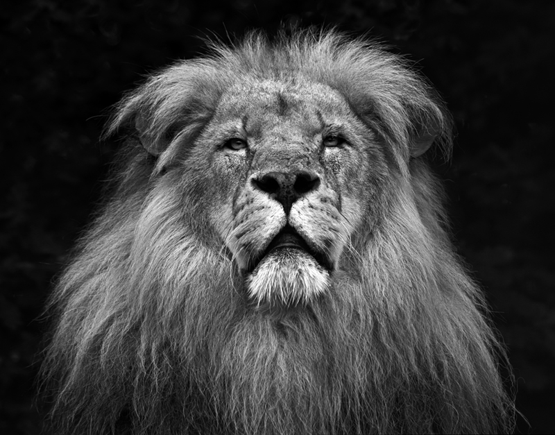 Royality © Paul Spencer– Honorable Mention in Wildlife, Amateur