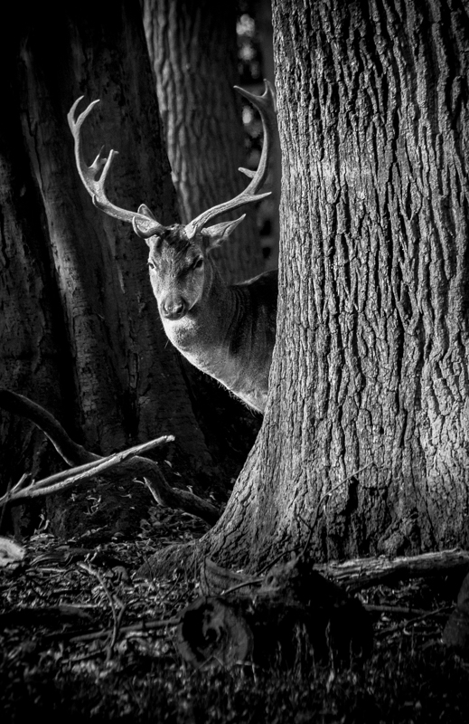 Wild I © Ulrik Beilke– Honorable Mention in Wildlife, Amateur