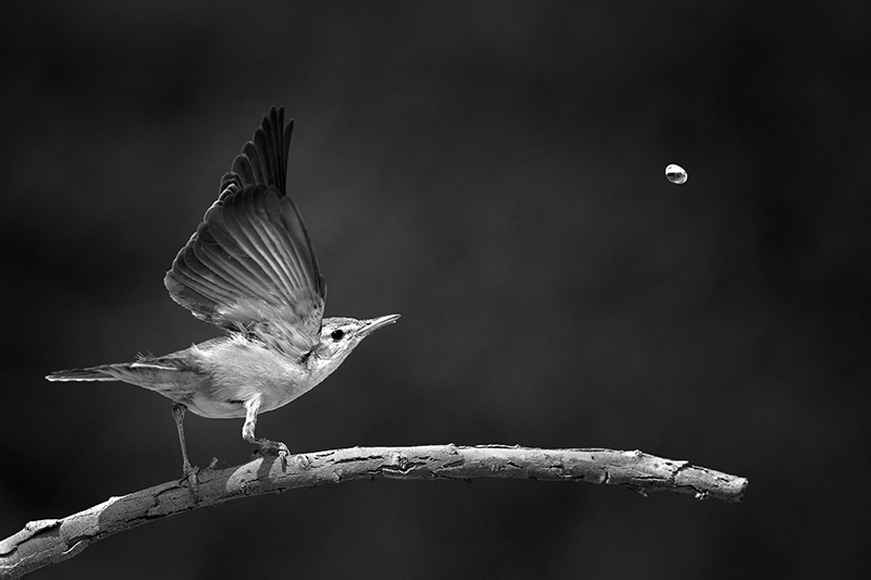 The Last Drop © Mohd Khorshed – Honorable Mention in Wildlife, Professional