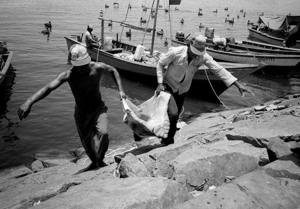 L. Shopping for Sharks. Caracas, Venezuela 1991