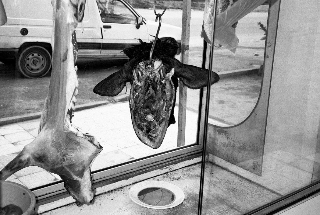 N. Half A Cow Head. Tunis, Tunisia 2001