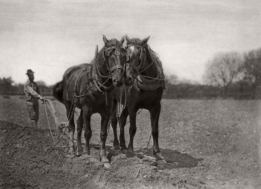 pictorial-rural-life-photographer-peter-henry-emerson-04