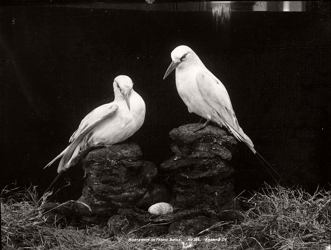 vintage-glass-plate-collodion-portraits-of-animals-and-birds-from-australia-02
