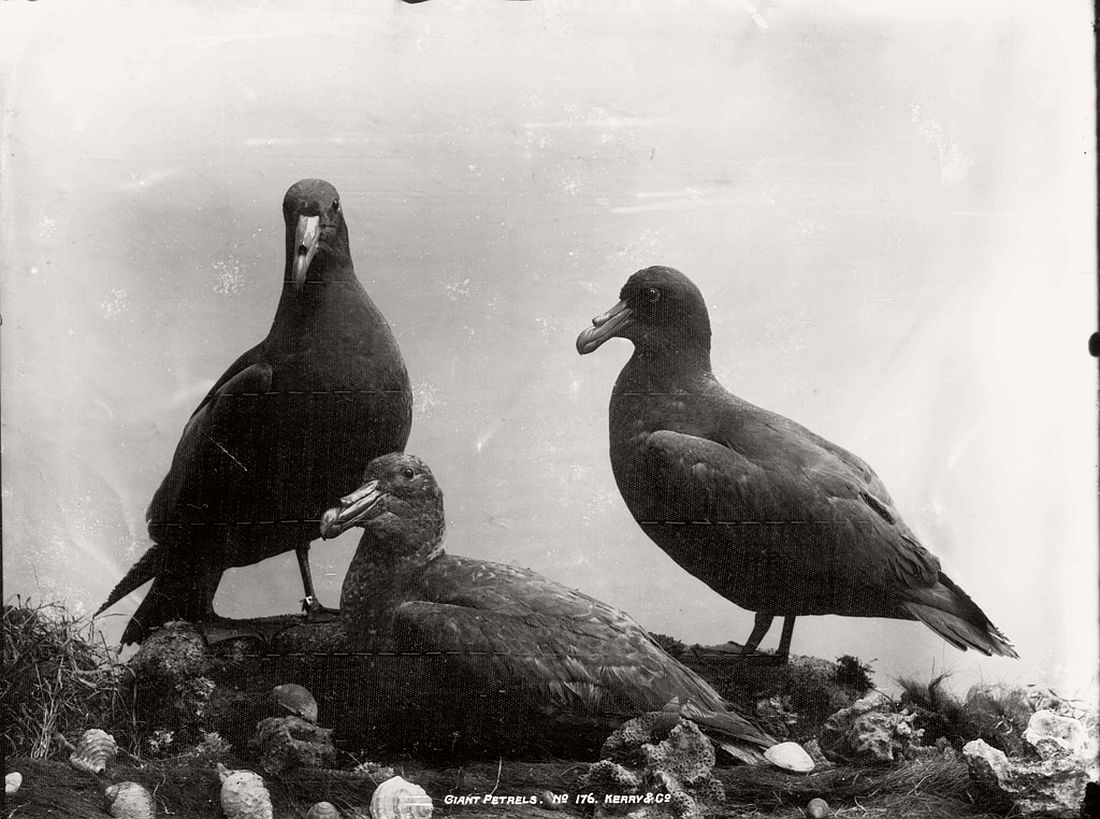 vintage-glass-plate-collodion-portraits-of-animals-and-birds-from-australia-05