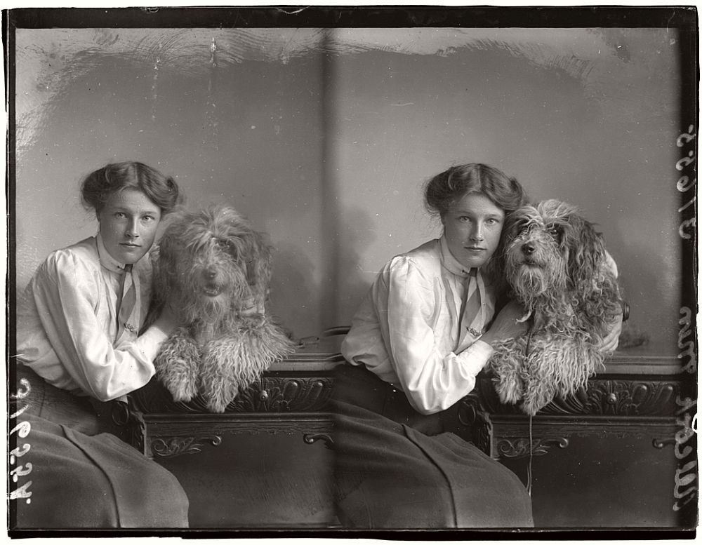 vintage-glass-wet-plate-collodion-portraits-of-pets-1910s-02