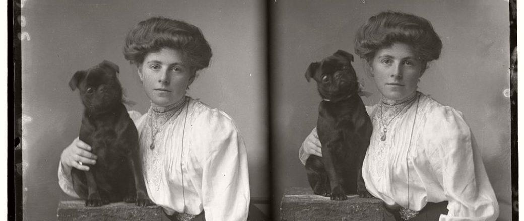 vintage glass plate portraits of pets 1910s monovisions