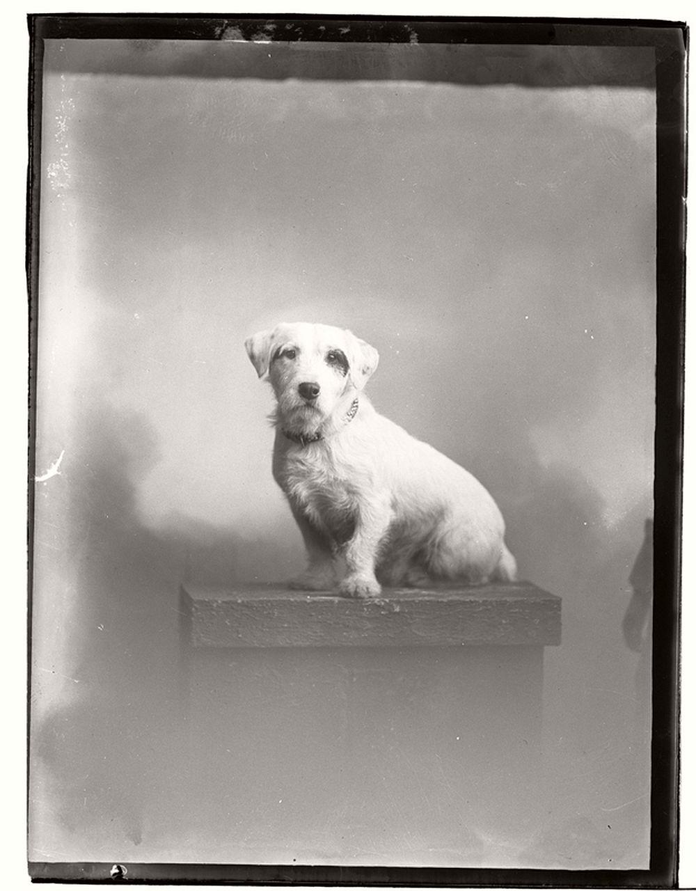 vintage-glass-wet-plate-collodion-portraits-of-pets-1910s-08