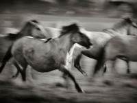 Interview with Horse Photographer Mark Tripp