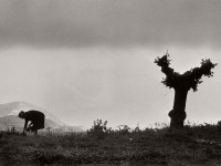 Henri Cartier-Bresson: Landscapes