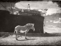 Jan Gulfoss: Surreal Black and White Wildlife
