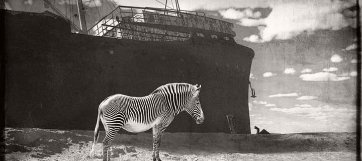 Jan Gulfoss: Surreal Black and White Wildlife
