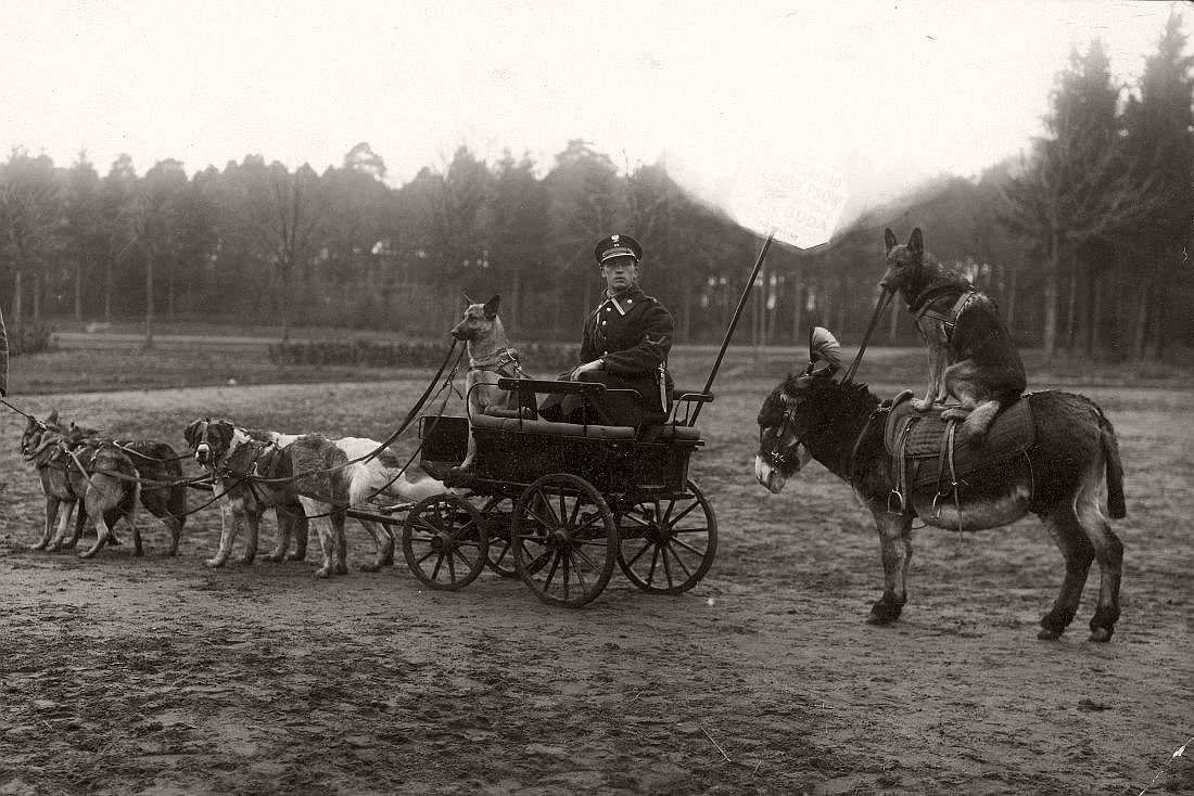 Police Dog Training at the Citadel, Warsaw, 1929