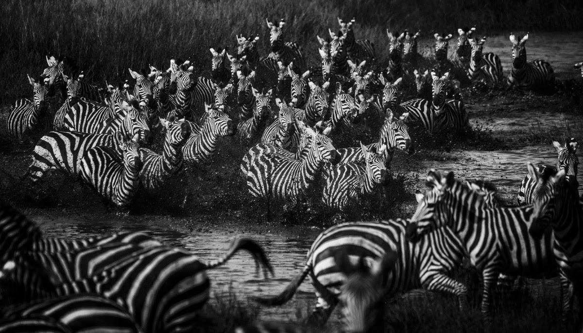 laurent-baheux-the-family-album-of-wild-africa-01