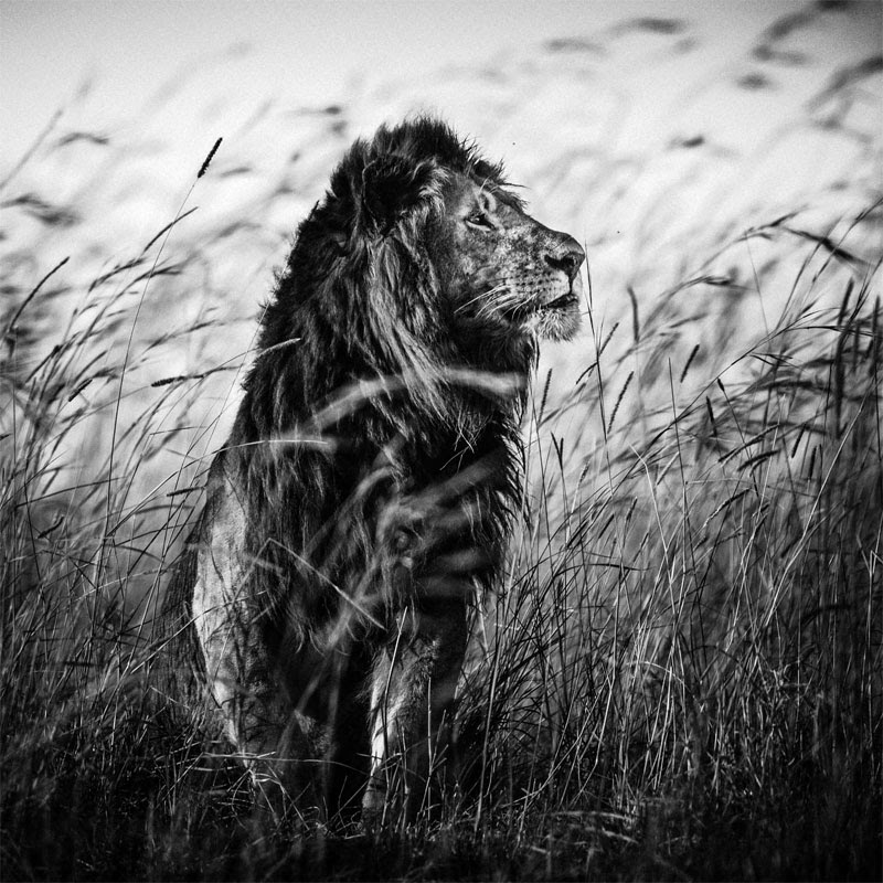 laurent-baheux-the-family-album-of-wild-africa-02