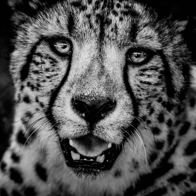 laurent-baheux-the-family-album-of-wild-africa-03