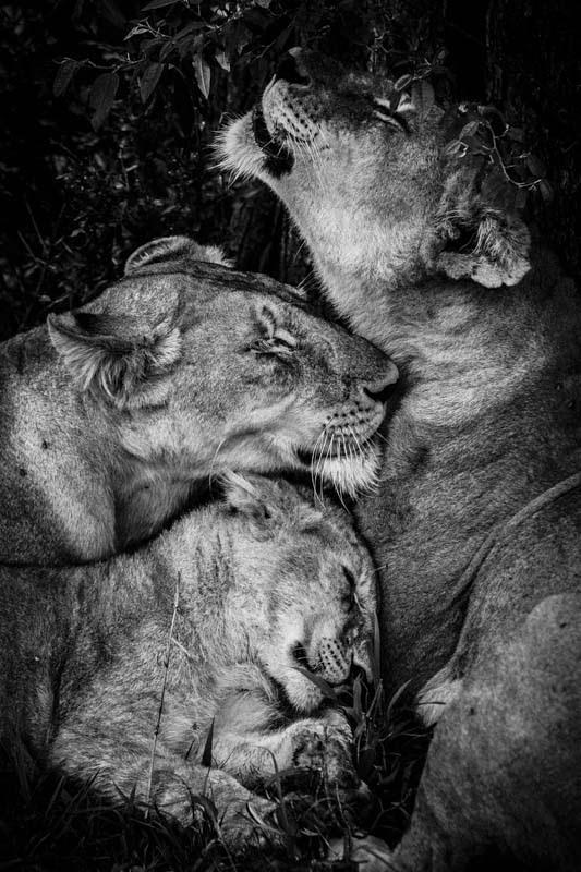 laurent-baheux-the-family-album-of-wild-africa-04