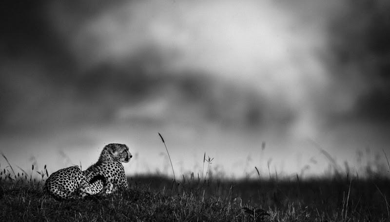 laurent-baheux-the-family-album-of-wild-africa-05