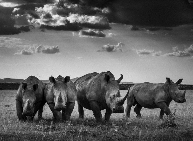 laurent-baheux-the-family-album-of-wild-africa-06