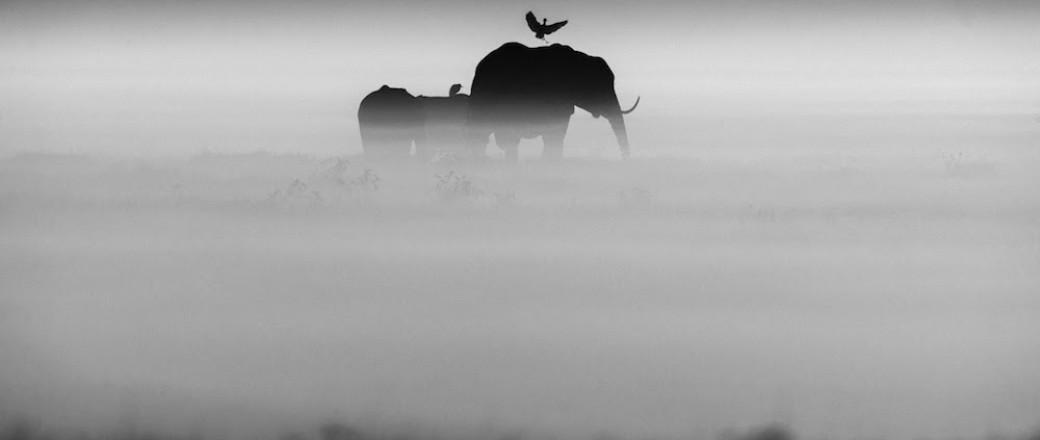 Laurent Baheux: The Family Album of Wild Africa