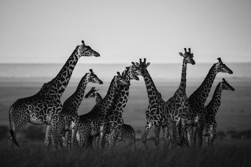 laurent-baheux-the-family-album-of-wild-africa-08